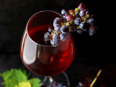 Сорт вина Мерло